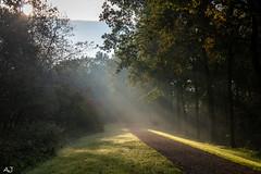 Misty morning - Natuurpark Lelystad