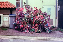 Funky bush (herbdolphy) Tags: analogique argentique analog color 35mm pellicule film filmisnotdead pentax p30n 50mm