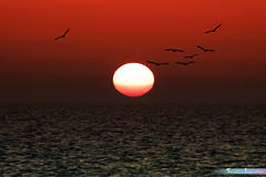 Rising Sun at Dawn *A Beautiful Nature* (iLOVEnature's Photography Inspiration) Tags: risingsunatdawn abeautifulnature morning birds birdies sun horizon lakemichigan lakeview lake nature landscape macro water sunrise lakeshore lakeshoredrive chicago illinois us usa sea seagull spring