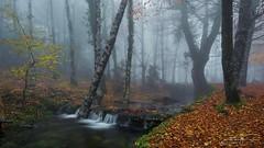 Misty Stream... (jorgeverdasca) Tags: autumn rainyday goth landscape waterfall mist fog woodland forest stream water nature gerês portugal