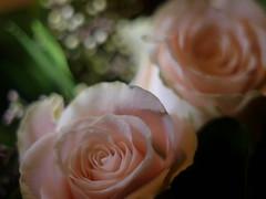 fuzzy roses (BeMo52) Tags: blumenstrauss bokeh bouquet flora macro makro natur nature roses pentacon50mmf18