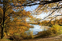 Autumn colors.... Blue and Gold (Greet N.) Tags: drenthe landscape autumncolors water trees november