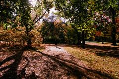 Warming (ewitsoe) Tags: light shadow park nikonfm2 film analog analogue forest setting mood bright autumn fall woman lady female warsaw warszawa ewitsoe fujifilmsupera autumnal moody cinematic