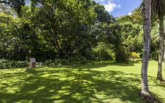 Botanical Garden / Ботанический сад (dmilokt) Tags: природа nature пейзаж landscape лес forest дерево tree парк park сад garden dmilokt nikon d850