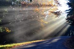 Et la lumière fût...  -  And the light is... (Philippe Haumesser (+ 7000 000 view)) Tags: lumière light rayons rays arbres trees route road soleil sun automne autumn nikond7000 nikon d7000 reflex 2018 forêt forest arbre tree forêts forests vosges alsace elsass france hautrhin 68