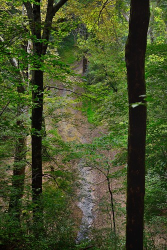 River Styx Flowing Beyond and Through the Trees (Mammoth Cave National Park)