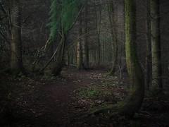 Enveloping Darkness (Glenn D Reay) Tags: woodland mysterious eerie dark trees beamish spooky pentaxart pentax k70 sigma1770hsm glennreay