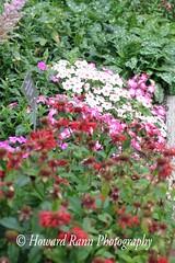 St John's (157) (Framemaker 2014) Tags: st johns newfoundland labrador canada municipal botantical gardens pippy park