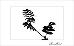 Scherenschnitt (Thomas Rausch (!)) Tags: hochkontrastfotografie gegenlicht 1bit scherenschnitt olympus sw zauberstab