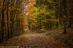 The colorful forest path. (andreasheinrich) Tags: nature forest path trees autumn autumncolors november afternoon germany badenwürttemberg neckarsulm dahenfeld overcast colorful deutschland natur wald weg bäume herbst herbstfarben nachmittag bewölkt farbenfroh nikond7000