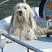 dogs on boats (9)