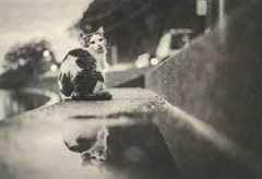 after rain (tomomichi_ito) Tags: cat animal monochrome reflection japanesepaper