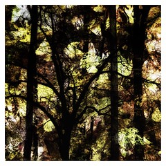 Trees. (jeanne.marie.) Tags: squareformat sunlight autumn abstract mydailywalk iphoneography iphone7plus treescape trees