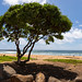 Beach Kealia Kauai Hawaii