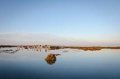 Riflessi al tramonto (alex.83g) Tags: tramonto lago camargue france acqua cavalli panorama cielo nuvole riflessi blu azzurro sunset horse sky lake reflections