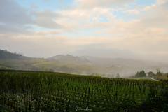 Fake painting (stefanobosia) Tags: fake fog landscape nature hills fujifilm xt20 paesaggio colline nebbia natura finto vigne vinegrape piedmont italia italy morning mattina flickrfriday nizzamonferrato piemonte vigneti