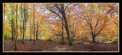 OTOÑO  EN URADERRA - Pano 8 Fotos Verticales (MONTXO-DONOSTIA) Tags: otoño uraederra colores baquedano nafarroa euskalherria montx0donostia