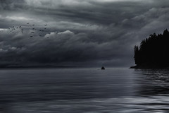 Solitary (charhedman) Tags: pacificocean vancouverisland goingfishing birds darkclouds solitary boat water monochromatic sky