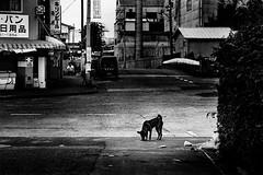 city 706 (soyokazeojisan) Tags: japan osaka city street dog road bw blackandwhite monochrome analog olympus m1 om1 100mm film trix kodak memories 1970s absoluteblackandwhite
