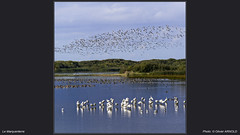 Le Marquenterre (olivier.arnold95) Tags: bird birds marquenterre baiedesomme picardie nature