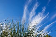 Sunny windy day... (Fabke.be) Tags: sun wind windy grass sky bluesky nature