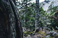 法貢之森│黑森林│Taiwan (Nick_Ning_Huang) Tags: 台灣 雪山 黑森林 圈谷 石 樹 山 天 天空 雲 taiwan syue black forest rock tree sky cloud light sunlight sony ilce7rm3 ilce 7rm3 a7r3 camera fe1635mmf4zaoss fe 1635 za