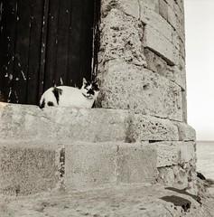 Cat friend of Rhodes (Nobusuma) Tags: hasselblad hasselblad500cm zeissdistagon50mmf4fle distagon 50mm f4 fle kodak tmax 100asa caffenolcm caffenol idevelopmyfilms developedathome ハッセルブラッド ディスタゴン 家でフィルムを現像した フィルム アナログ 白黒 中判写真 ギリシャ ドデカネス諸島 ロドス島 猫 greece dodecanese rhodes