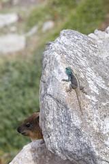 (Geonaut) Tags: betty'sbay gardenroute gartenrute stonypoint südafrika za