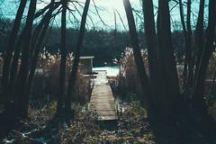 KRIS7174 (Chris.Heart) Tags: túra kéktúra okt hiking hungary forest winter tél erdő