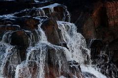 IMG_4896 (monika.carrie) Tags: monikacarrie wildlife scotland