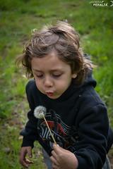 Diente de Leon (Javiera Peralta Toro-Moreno) Tags: fotografia photography fotografa nikon verde chile coyhaique diente de leon niño kid child boy