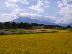 Mt. Iwate on the rice plain (しまむー) Tags: panasonic lumix dmcgx1 gx1 sigma art 19mm f28 dn round trip train