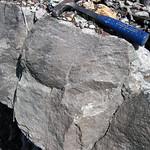 Limestone (Warix Run Member, Slade Formation, Upper Mississippian; Clack Mountain Road Outcrop, south of Morehead, Kentucky, USA) 7 thumbnail