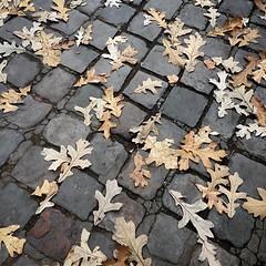 IMG_1043 (LooknFeel) Tags: paris leaves sidewalk •