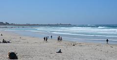 Asilomar State Beach (afagen) Tags: california pacificgrove asilomarstatebeach montereypeninsula asilomar beach pacificocean ocean