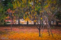 The Retreat of Autumn (HSS) (buffdawgus) Tags: california painterly nevadacity cementhillhouse canon70200mm28l lightroom6 canon5dmarkiii topazstudio sierranevadafoothills fall nevadacounty autumn