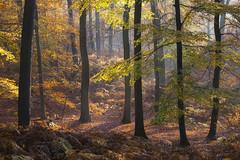 Patchwork automnal (Thomas Vanderheyden) Tags: automne autumn colors couleur lumiere light nature paysage landscape thomasvanderheyden fujifilm xt1 ngc beautifulearth