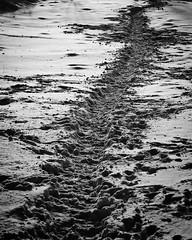 Spuren (Doblinus) Tags: schleswigholstein blackwhite schwarzweis nikon spuren handewitt nikond50 nikon1870 schnee