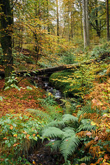 Autumn Woodland (Benjamin Driver) Tags: wood woods woodland land orange green yellow trees tree autumn autumnal forest landscape lakedistrict lake district tarnhows tarn hows 2018 leaves leaf fern colour vibrant vivid bright stream water river waterfall fall fallen fallentree dead deadtree