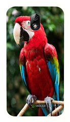 Red Macaw Parrot (smizhar22) Tags: parrot macaw bird beak perching perched portrait profile animalwing tropicalrainforest tropicalbird red multicolored outdoors greencolor saturatedcolor colorimage feather animalhead nature scarletmacaw tropicalclimate blue brilliant leaves leaf tree forest closeup vibrantcolor nopeople profileview dark oneanimal macro day vertical