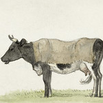 Standing cow with blanket (1816) by Jean Bernard (1775-1883). Original from The Rijksmuseum. Digitally enhanced by rawpixel. thumbnail