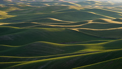 DSCF2013 (Brian.Schick) Tags: abstract graphic palouse steptoe rolling hills sunset wheat green washington minimalism