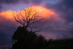 Feuerbaum (karo.perez73) Tags: landschaft baum tree bayern sunset cloud fire