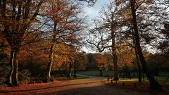 New Forest in Autumn - my favourite place! (Claire Fun) Tags: woods new forest trees autumn fall orange