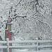 Snowy Gas Pump