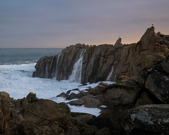 Lovers Point State Marine Reserve, Pacific Grove 1/18/19 (Sharon Mollerus) Tags: pacificgrove ca cg19