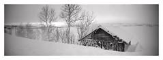(2019) (phamnes) Tags: grain norway snow winter epsonv600 blackandwhitephoto ishootfilm filmphotography blackandwhitefilm panorama 135film 35mm 35mmfilm 400iso ultrafinextreme400 ultrafine sprocketrocket lomography