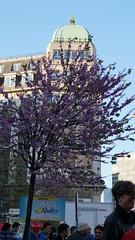 2013-05-18_20-09-41_NEX-6_DSC04654 (Miguel Discart (Photos Vrac)) Tags: 2013 70mm belgianpride belgie belgique belgium bru brussels brusselspride brusselspride2013 bruxelles bruxellespride bruxellespride2013 bxl cityparade divers e18200mmf3563 equality focallength70mm focallengthin35mmformat70mm gay iso100 lesbian lgbt manifestation nex6 pride pridebe sony sonynex6 sonynex6e18200mmf3563 thepridebe trans transgender transsexuel yourlocalpower