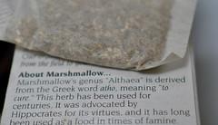 Marshmallow Root Tea (vshorty) Tags: macromondays brew marshmallowroottea naturalremedies plant tea organic
