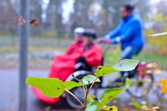 Cykling Utan Ålder in the forest
